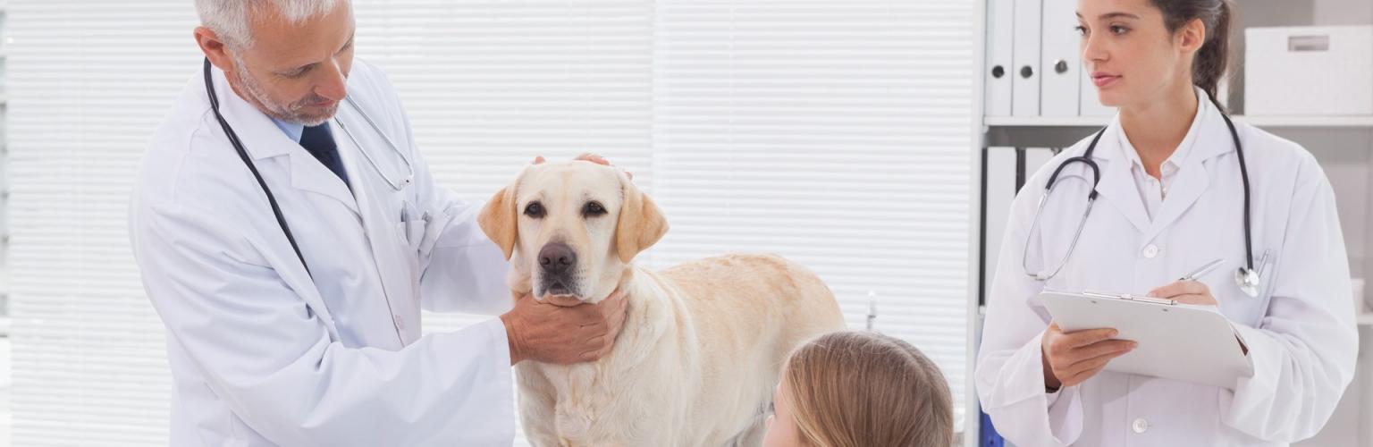 Informationen - Versorgungswerk der Tierärztekammer Nordrhein